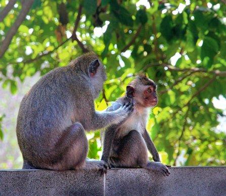 posti più instagrammabili di Bali spiagge scimmie